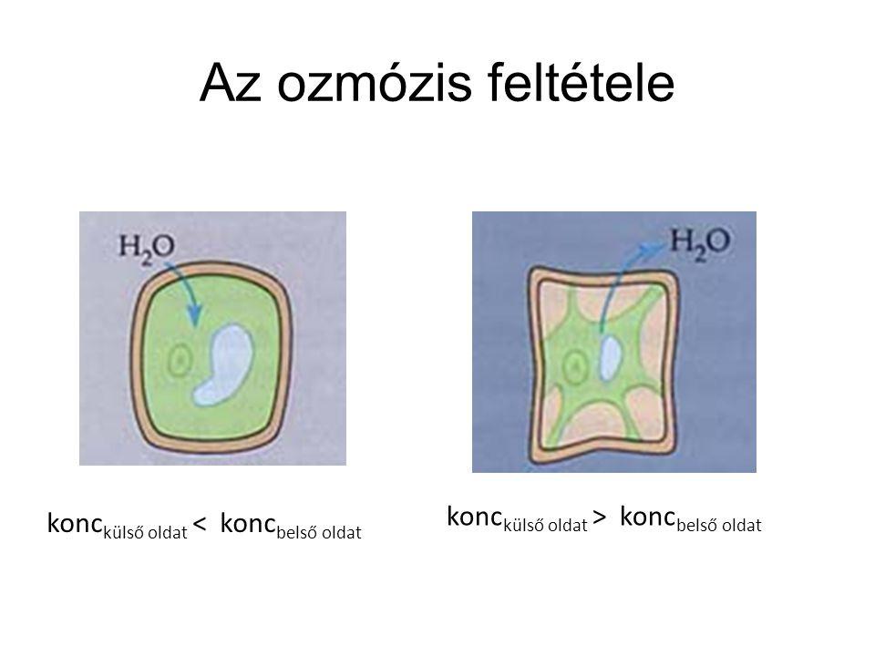 Az ozmózis feltétele konc külső oldat > konc belső oldat konc külső oldat < konc belső oldat
