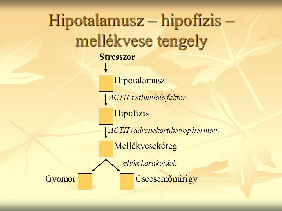 Hipotalamusz – hipofízis – mellékvese tengely Stresszor Hipotalamusz Hipofízis Mellékvesekéreg GyomorCsecsemőmirigy ACTH-t stimuláló faktor ACTH (adrenokortikotrop hormon) glükokortikoidok