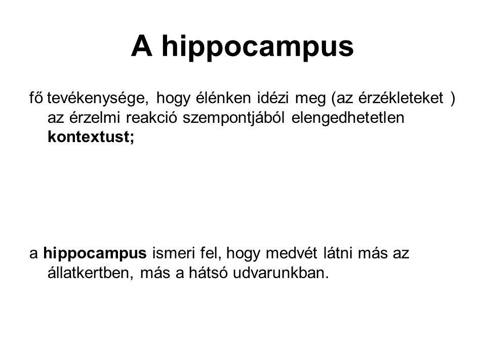 A hippocampus fő tevékenysége, hogy élénken idézi meg (az érzékleteket ) az érzelmi reakció szempontjából elengedhetetlen kontextust; a hippocampus ismeri fel, hogy medvét látni más az állatkertben, más a hátsó udvarunkban.