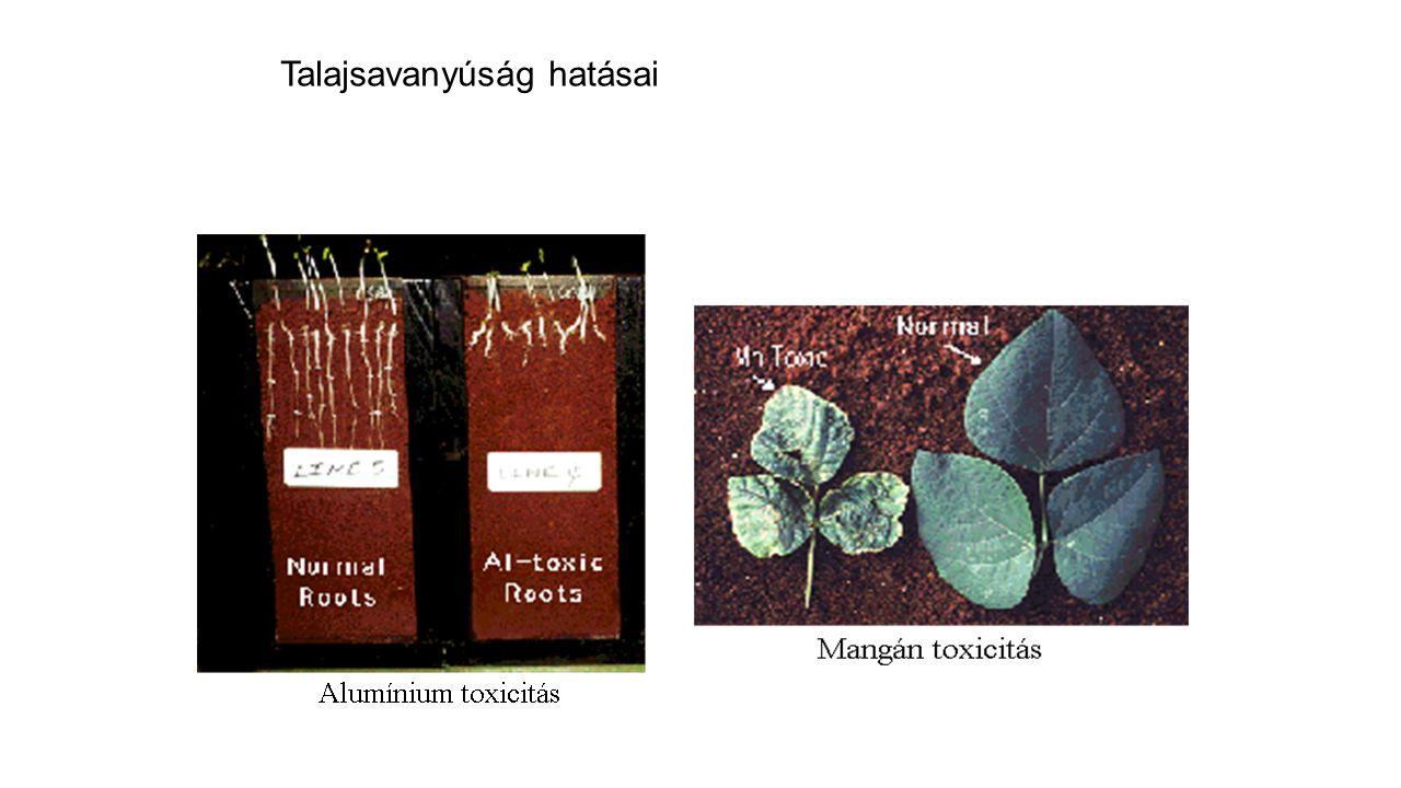 Talajsavanyúság hatásai