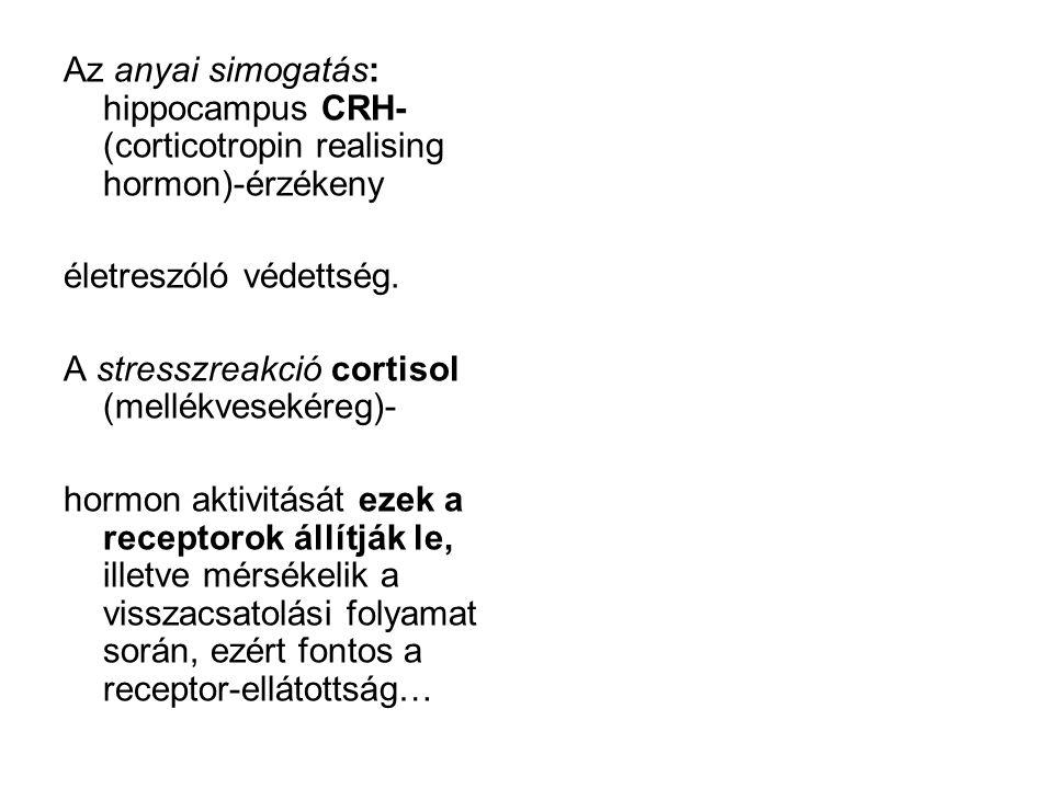 Az anyai simogatás: hippocampus CRH- (corticotropin realising hormon)-érzékeny életreszóló védettség. A stresszreakció cortisol (mellékvesekéreg)- hor