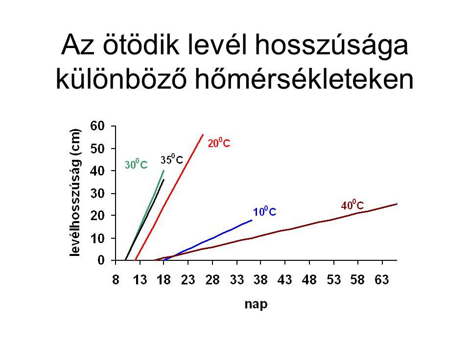 Az ötödik levél hosszúsága különböző hőmérsékleteken