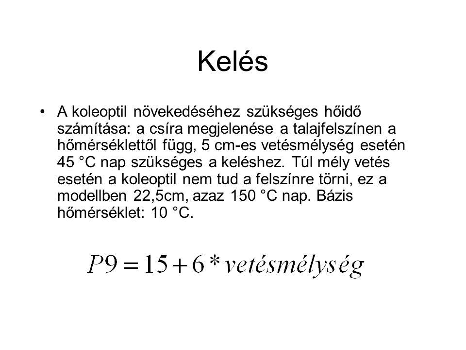 Kelés A koleoptil növekedéséhez szükséges hőidő számítása: a csíra megjelenése a talajfelszínen a hőmérséklettől függ, 5 cm-es vetésmélység esetén 45