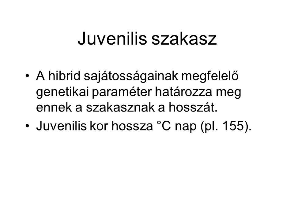 Juvenilis szakasz A hibrid sajátosságainak megfelelő genetikai paraméter határozza meg ennek a szakasznak a hosszát. Juvenilis kor hossza °C nap (pl.