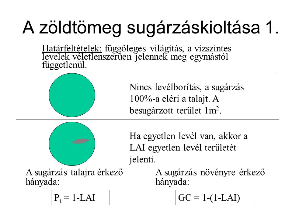 A zöldtömeg sugárzáskioltása 1. Határfeltételek: függőleges világítás, a vízszintes levelek véletlenszerűen jelennek meg egymástól függetlenül. Nincs