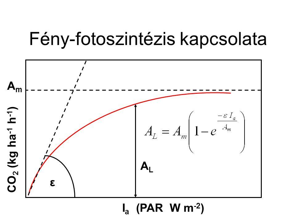 Fény-fotoszintézis kapcsolata ε ALAL CO 2 (kg ha -1 h -1 ) I a (PAR W m -2 ) AmAm