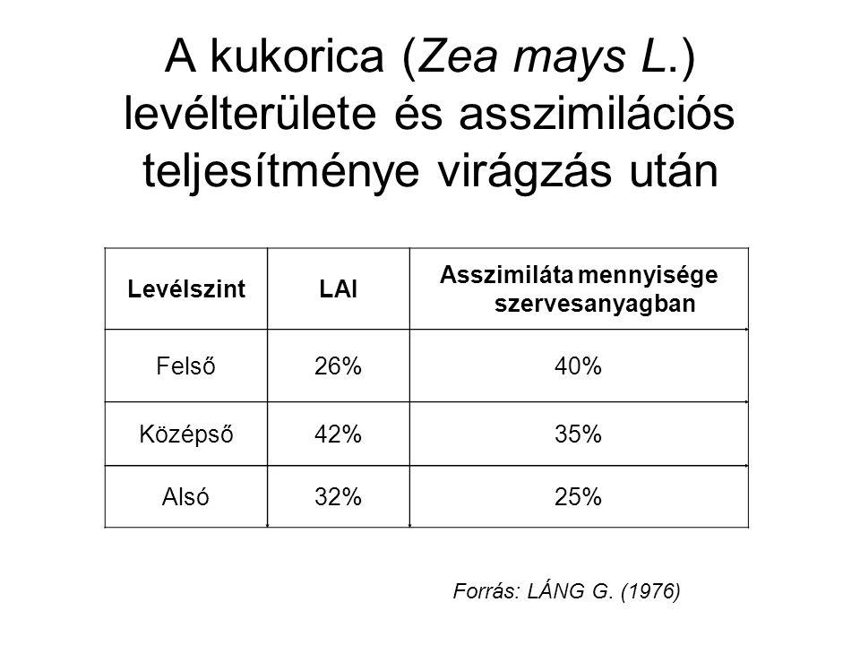 A kukorica (Zea mays L.) levélterülete és asszimilációs teljesítménye virágzás után LevélszintLAI Asszimiláta mennyisége szervesanyagban Felső26%40% K