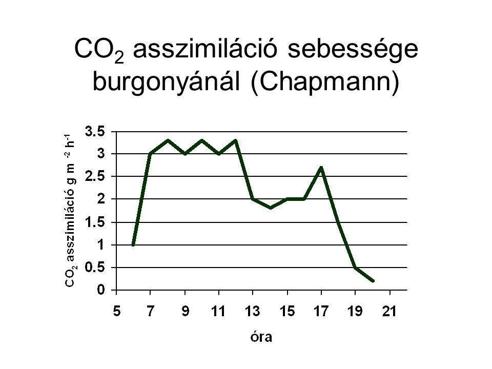 CO 2 asszimiláció sebessége burgonyánál (Chapmann)
