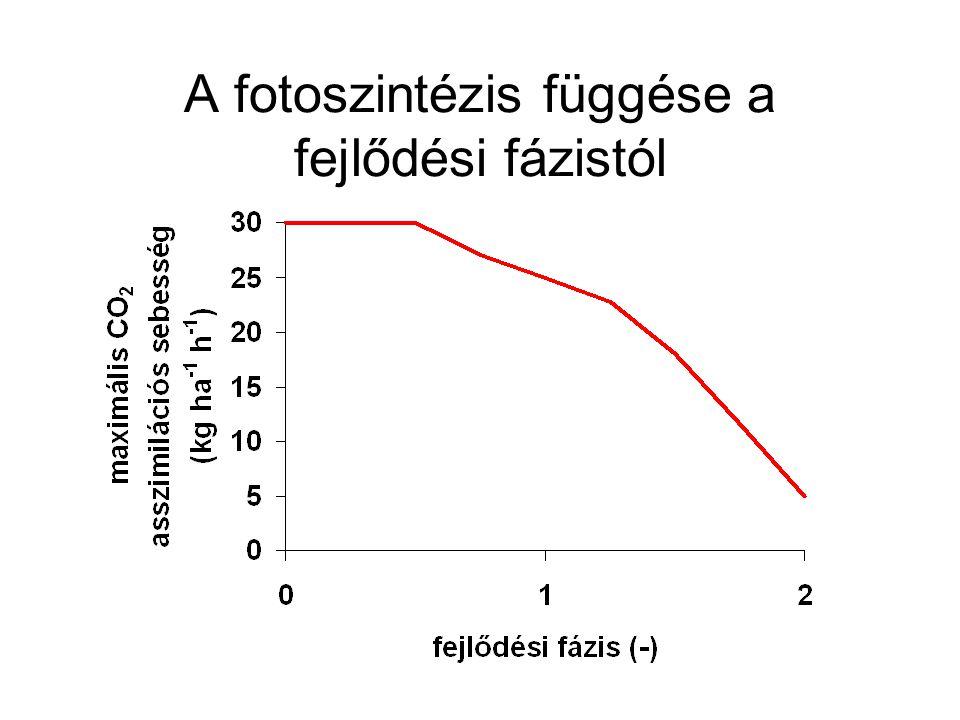 A fotoszintézis függése a fejlődési fázistól