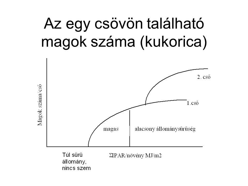 Az egy csövön található magok száma (kukorica)
