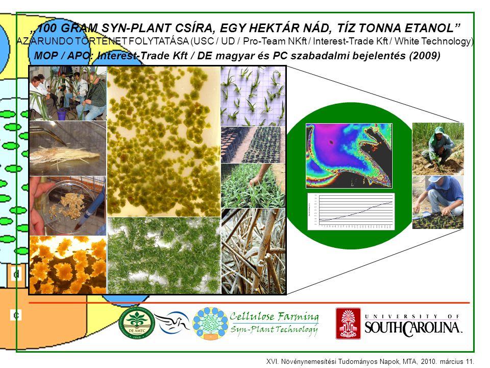 """Syn-Plant Technology Cellulose Farming """"100 GRAM SYN-PLANT CSÍRA, EGY HEKTÁR NÁD, TÍZ TONNA ETANOL"""" AZ ARUNDO TÖRTÉNET FOLYTATÁSA (USC / UD / Pro-Team"""