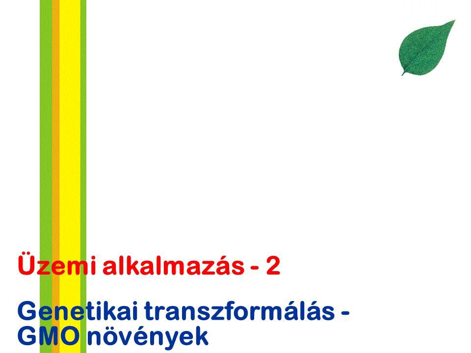 Genetikai transzformálás - GMO növények Üzemi alkalmazás - 2
