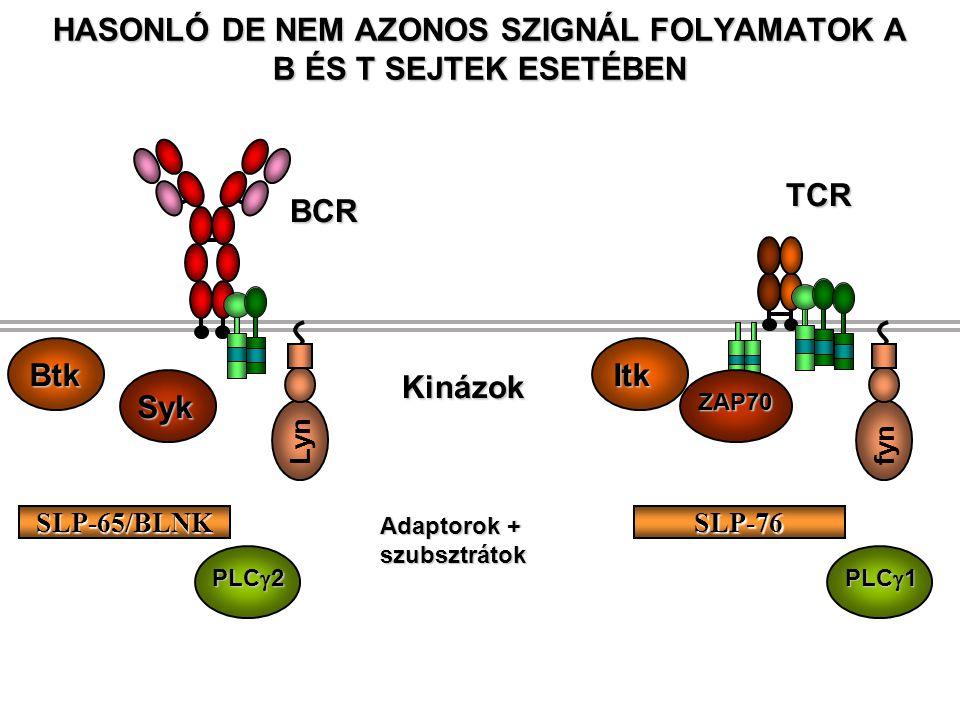 IL-2 IL-2R  1 Antigén Epitéliális sejt Naív T sejt Csak szignál 1 Anergia A T sejt nem képes IL-2-t termelni Nincs proliferáció és klonális expanzió Immunszupresszív szerek - mindenféleT sejt funkció gátlás (nem specifikus) Csak szignál 1 (szignál 2 nélkül) – T sejt válaszképtelenség egyetlen specifikus antigénre Saját fehérje epitópok nem klasszikus APC-ben prezentálva Pl.