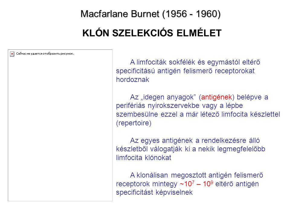 Macfarlane Burnet (1956 - 1960) Macfarlane Burnet (1956 - 1960) KLÓN SZELEKCIÓS ELMÉLET A limfociták sokfélék és egymástól eltérő specificitású antigé