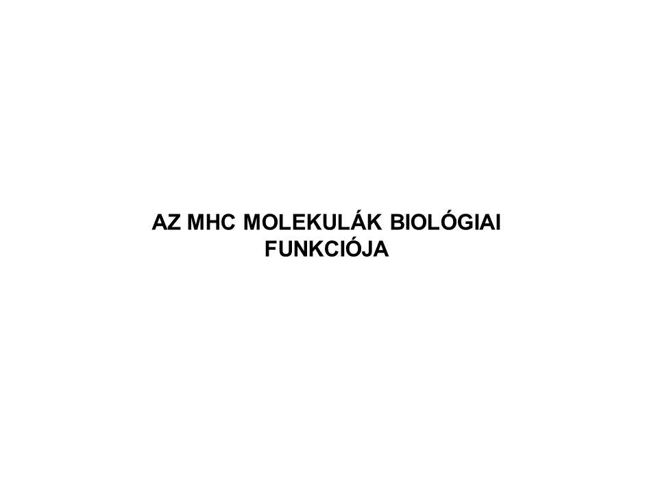 AZ MHC MOLEKULÁK BIOLÓGIAI FUNKCIÓJA