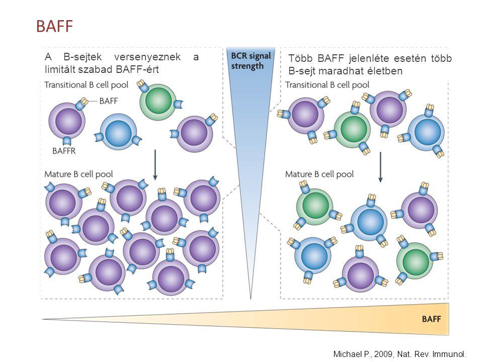 BAFF Több BAFF jelenléte esetén több B-sejt maradhat életben A B-sejtek versenyeznek a limitált szabad BAFF-ért Michael P., 2009, Nat. Rev. Immunol.