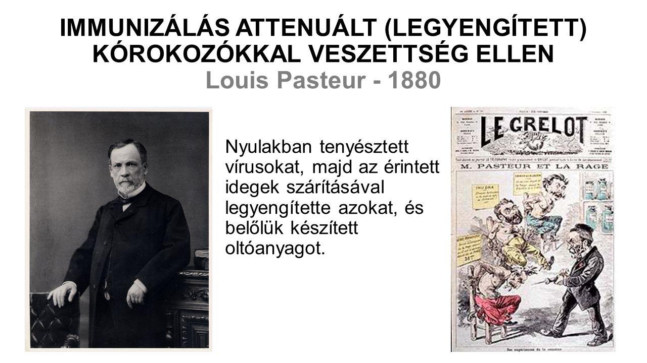 IMMUNIZÁLÁS ATTENUÁLT (LEGYENGÍTETT) KÓROKOZÓKKAL VESZETTSÉG ELLEN Louis Pasteur - 1880 Nyulakban tenyésztett vírusokat, majd az érintett idegek szárításával legyengítette azokat, és belőlük készített oltóanyagot.