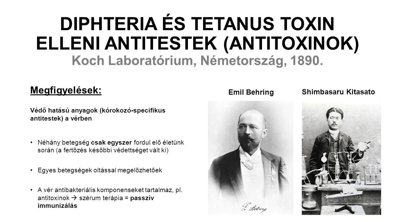 DIPHTERIA ÉS TETANUS TOXIN ELLENI ANTITESTEK (ANTITOXINOK) Koch Laboratórium, Németország, 1890. Megfigyelések: Védő hatású anyagok (kórokozó-specifik