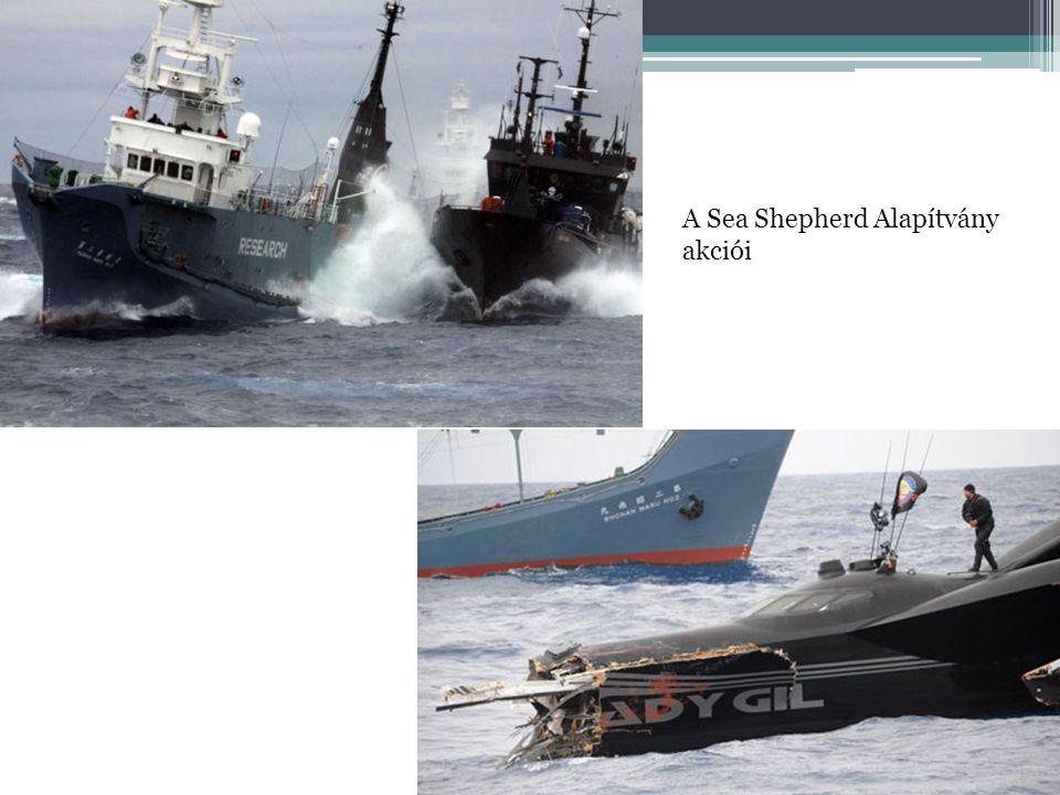 A Sea Shepherd Alapítvány akciói