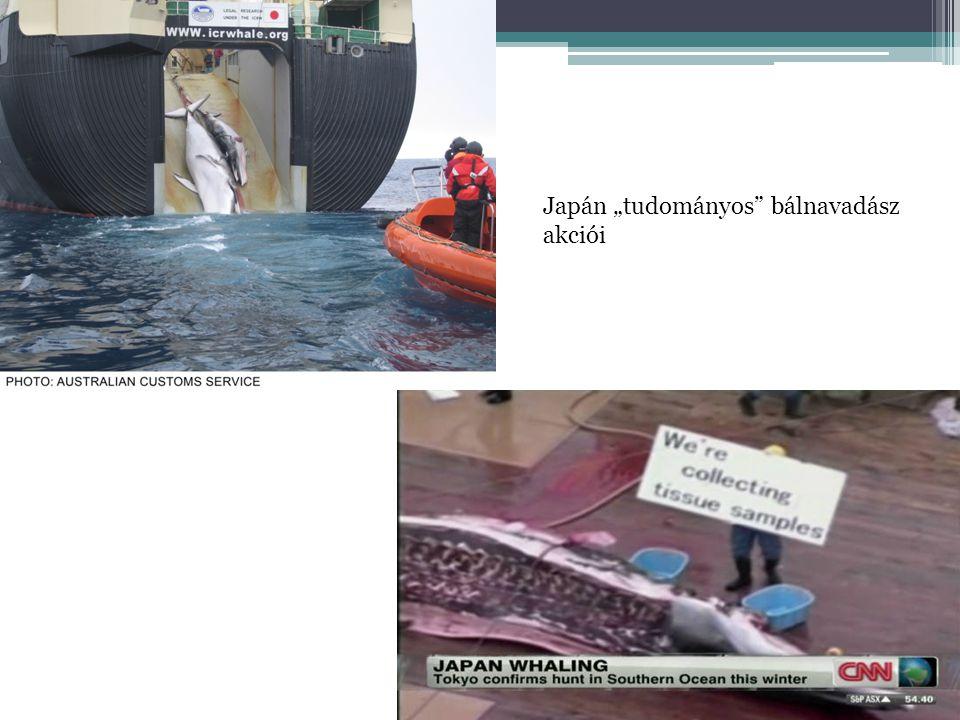 """Japán """"tudományos"""" bálnavadász akciói"""