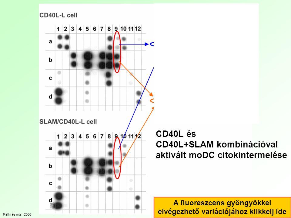 CD40L és CD40L+SLAM kombinációval aktivált moDC citokintermelése Réthi és mtsi.