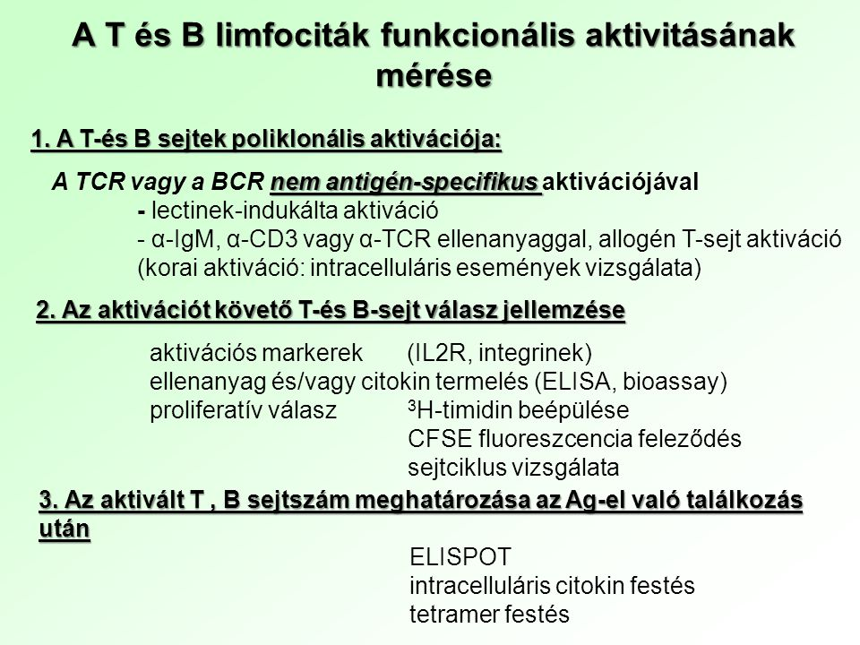 Poliklonális B sejt aktivátorok hatásai AktivátorT-sejt függésIg szekréció Humán B sejt PWM (pokeweed mitogen) nincsvan SpA (szuperantigén, staphylococcus protein A) nincsvan EBV (transzformáló hatású is) vanvan Anti-Igvan citokinek jelenlétében Egér B sejt LPSnincsvan PWMvanvan PPD (purified protein derivate, mikobakteriumból) nincsvan Anti-Ignincs citokinek jelenlétében Poliklonális T sejt aktivátorok Phytohaemagglutinin (PHA) lektin Canavalia ensiformis Concanavalin A (ConA) lektin Phaseolus vulgaris anti-CD3 Monoklonális ellenanyag