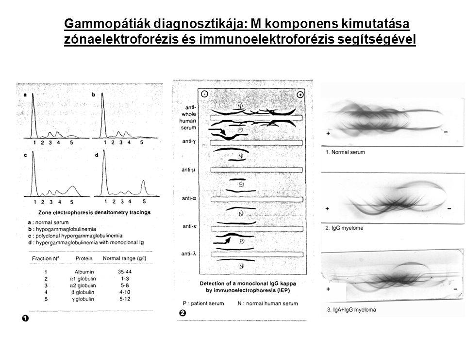 Gammopátiák diagnosztikája: M komponens kimutatása zónaelektroforézis és immunoelektroforézis segítségével