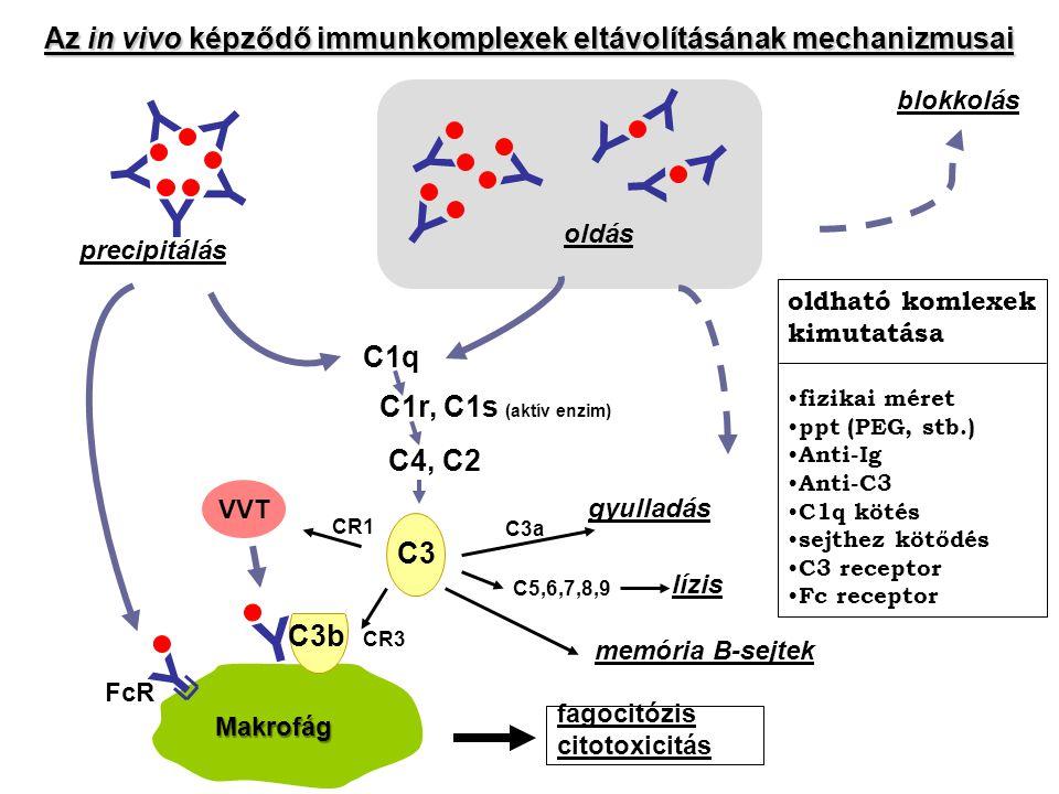 Y Y Y Y Y Y Y Y Y Y Y Y precipitálás oldás blokkolás C1q C1r, C1s (aktív enzim) C4, C2 C3a C5,6,7,8,9 lízis gyulladás memória B-sejtek C3 C3b Y Y FcR