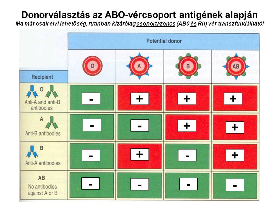 Donorválasztás az ABO-vércsoport antigének alapján Ma már csak elvi lehetőség, rutinban kizárólag csoportazonos (AB0 és Rh) vér transzfundálható! - -