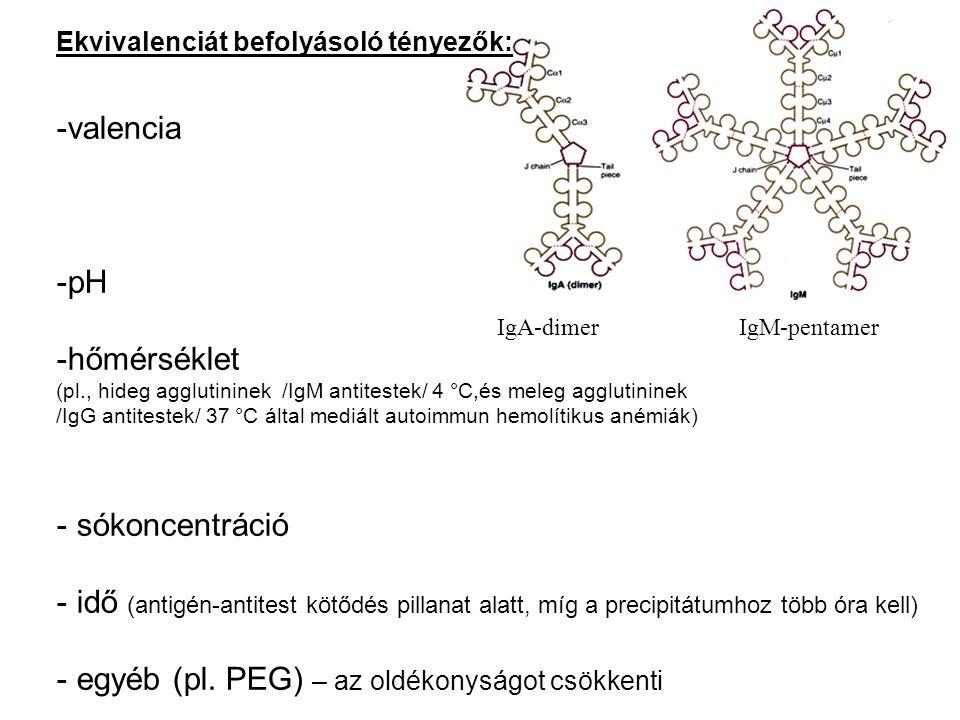 Ekvivalenciát befolyásoló tényezők: -valencia -pH -hőmérséklet (pl., hideg agglutininek /IgM antitestek/ 4 °C,és meleg agglutininek /IgG antitestek/ 3
