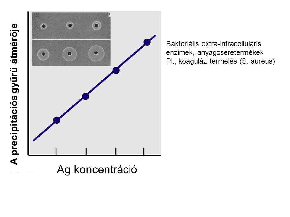 Ag koncentráció A precipitációs gyűrű átmérője Bakteriális extra-intracelluláris enzimek, anyagcseretermékek Pl., koaguláz termelés (S. aureus)