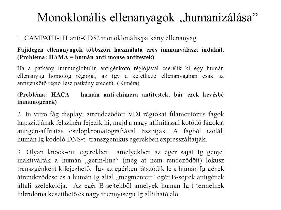 """Monoklonális ellenanyagok """"humanizálása 1."""