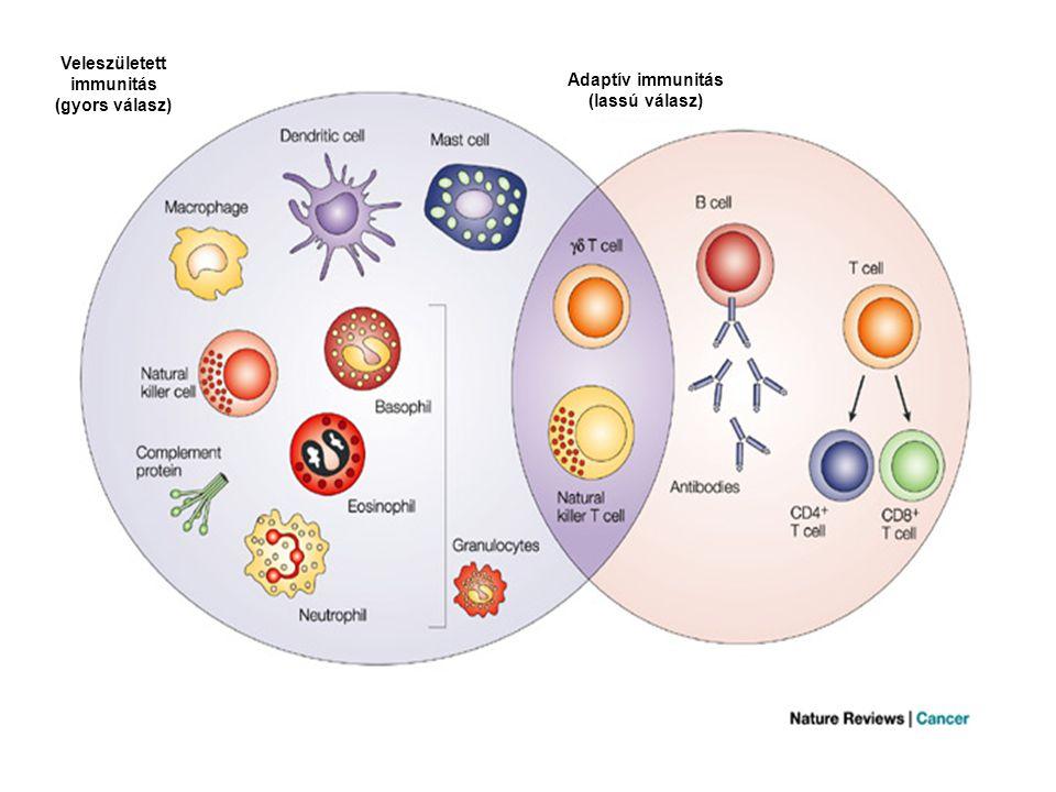 Veleszületett immunitás (gyors válasz) Adaptív immunitás (lassú válasz)