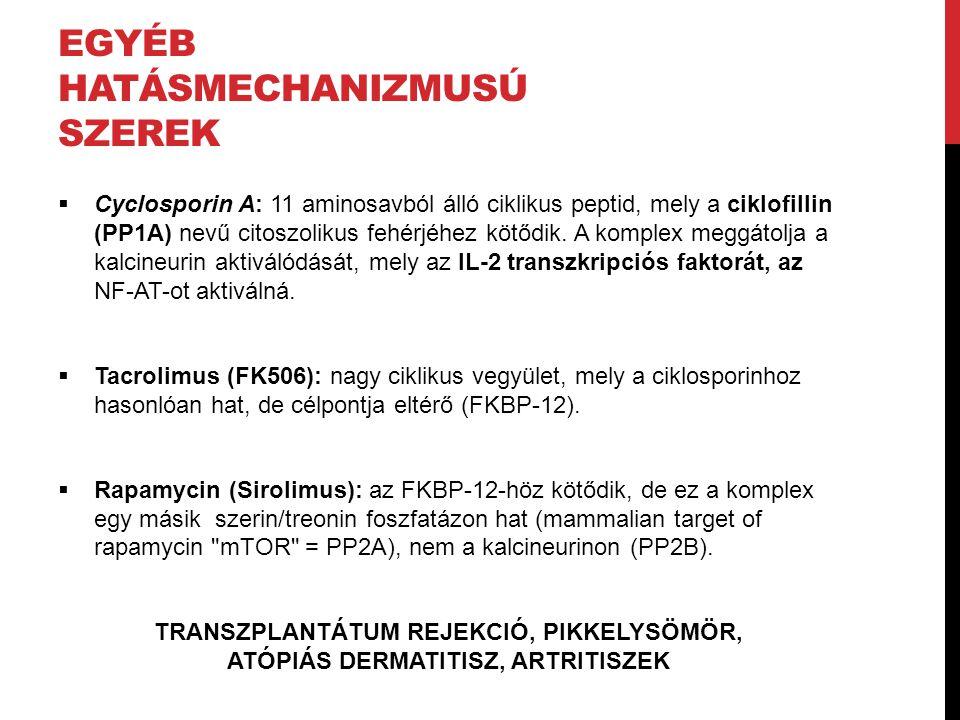 EGYÉB HATÁSMECHANIZMUSÚ SZEREK  Cyclosporin A: 11 aminosavból álló ciklikus peptid, mely a ciklofillin (PP1A) nevű citoszolikus fehérjéhez kötődik. A