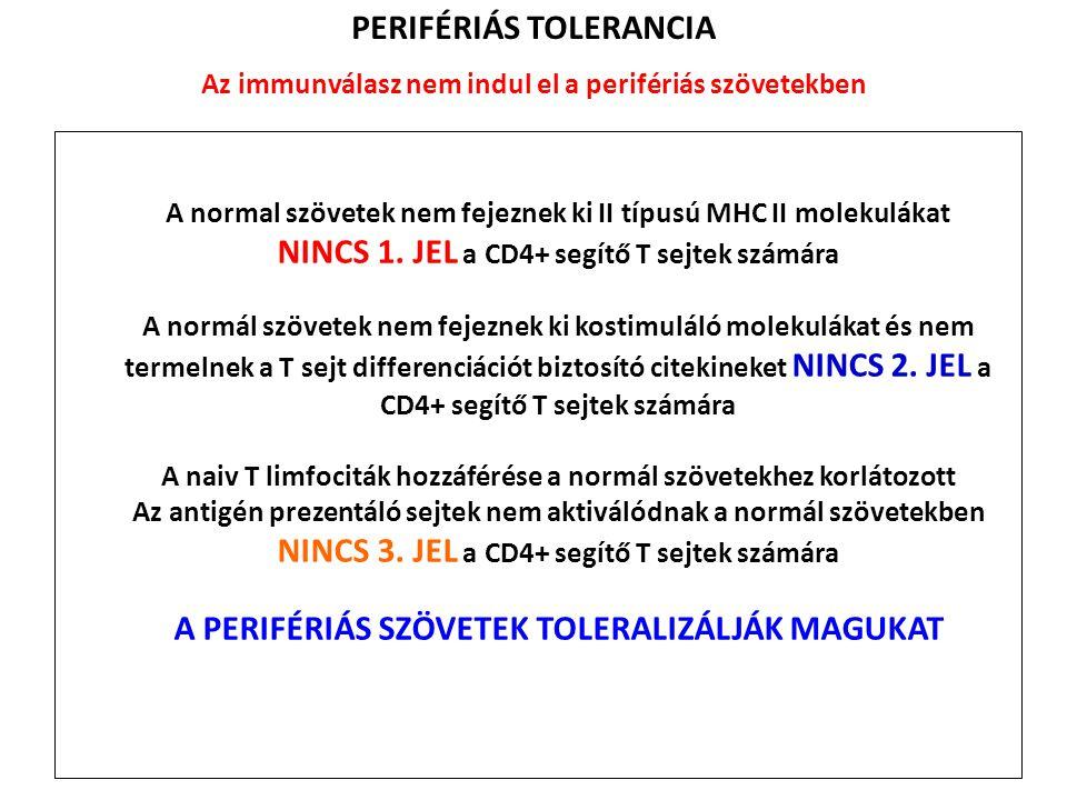 A normal szövetek nem fejeznek ki II típusú MHC II molekulákat NINCS 1. JEL a CD4+ segítő T sejtek számára A normál szövetek nem fejeznek ki kostimulá