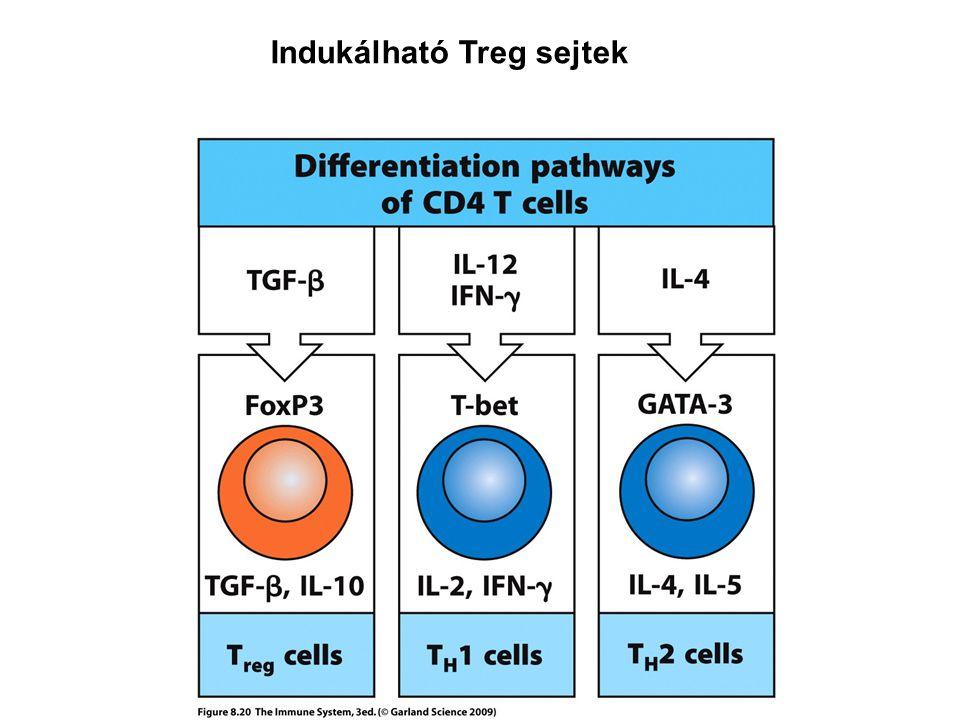 Indukálható Treg sejtek