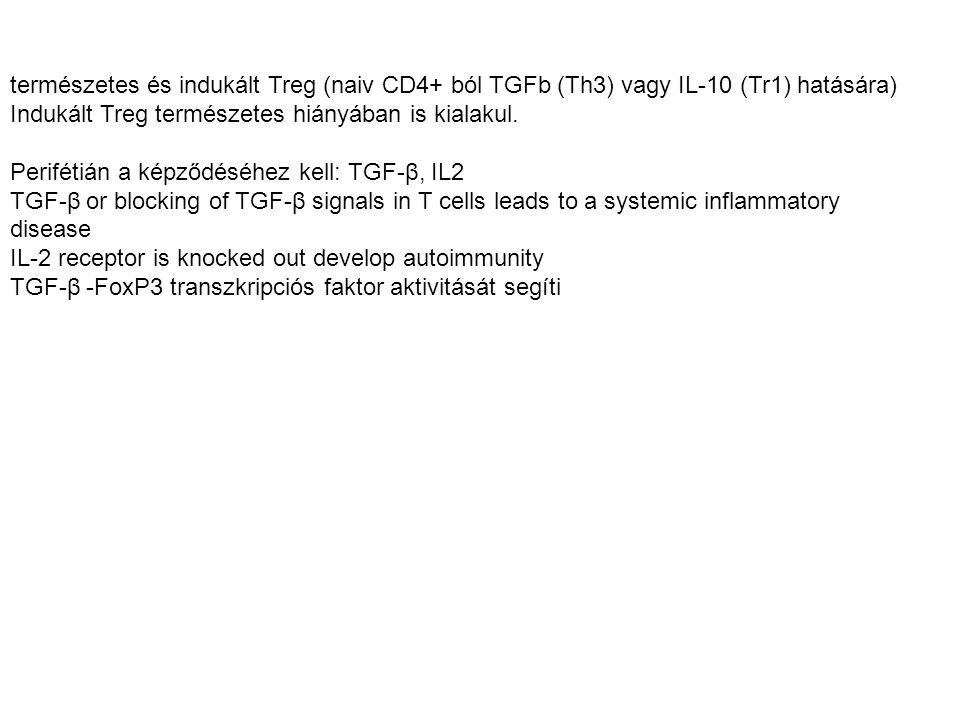 természetes és indukált Treg (naiv CD4+ ból TGFb (Th3) vagy IL-10 (Tr1) hatására) Indukált Treg természetes hiányában is kialakul. Perifétián a képződ