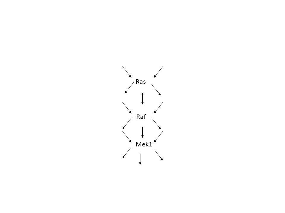 A Fas ligand transzkripciójának szabályozása