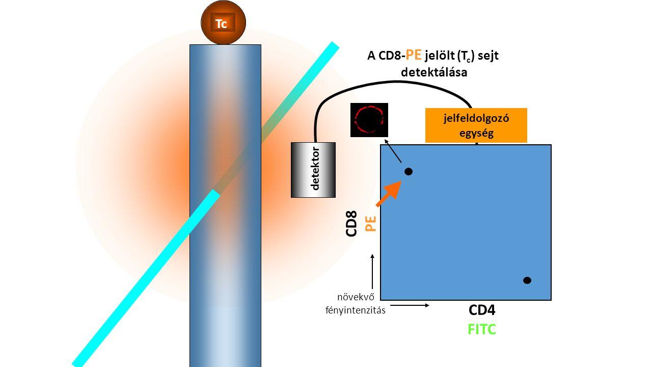 Tc detektor A CD8- PE jelölt (T c ) sejt detektálása CD8 PE CD4 FITC jelfeldolgozó egység növekvő fényintenzitás