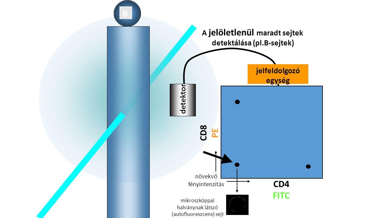 B detektor A jelöletlenül maradt sejtek detektálása (pl.B-sejtek) CD8 PE CD4 FITC jelfeldolgozó egység növekvő fényintenzitás mikroszkóppal halványnak