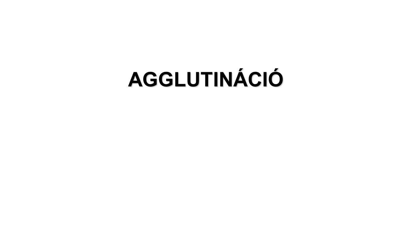 AGGLUTINÁCIÓ