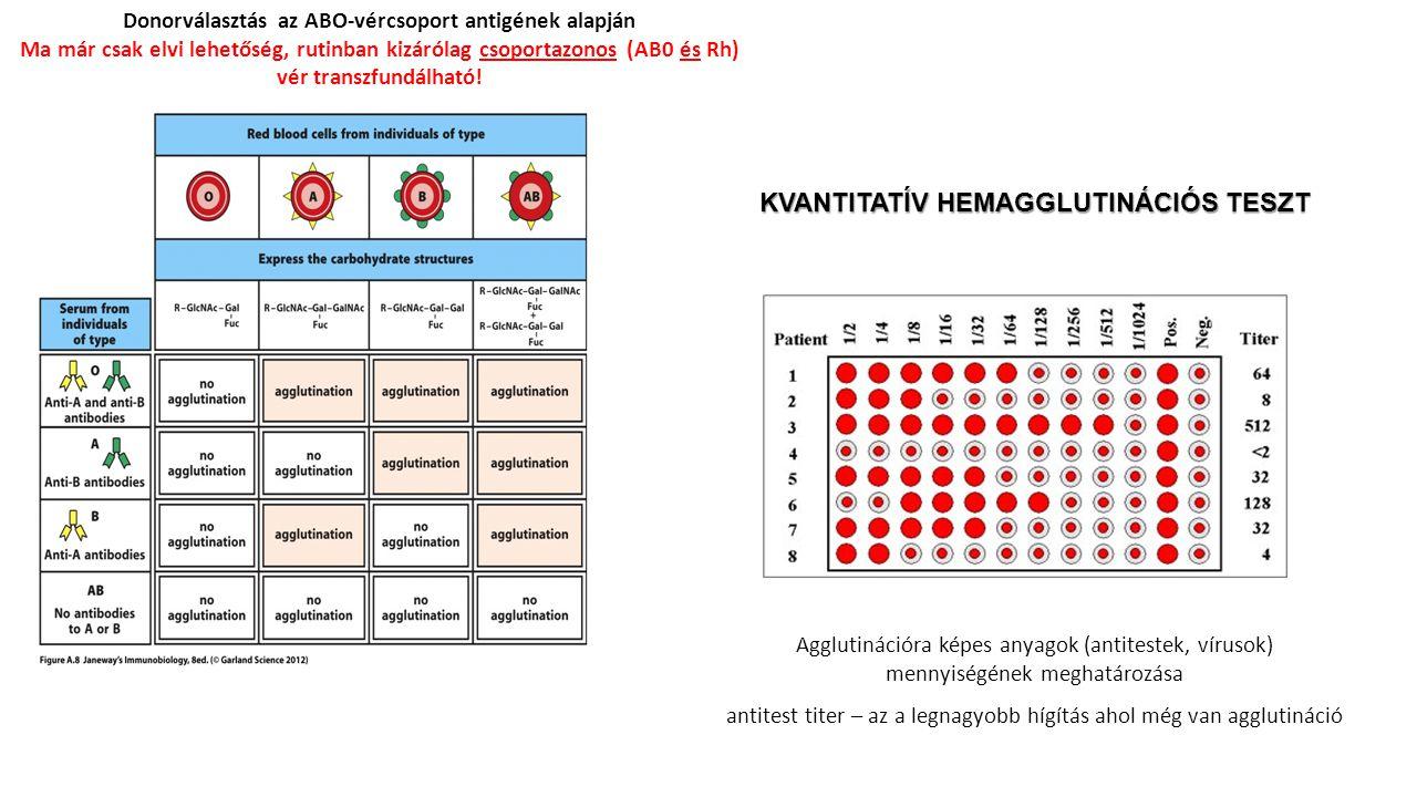 Donorválasztás az ABO-vércsoport antigének alapján Ma már csak elvi lehetőség, rutinban kizárólag csoportazonos (AB0 és Rh) vér transzfundálható! KVAN