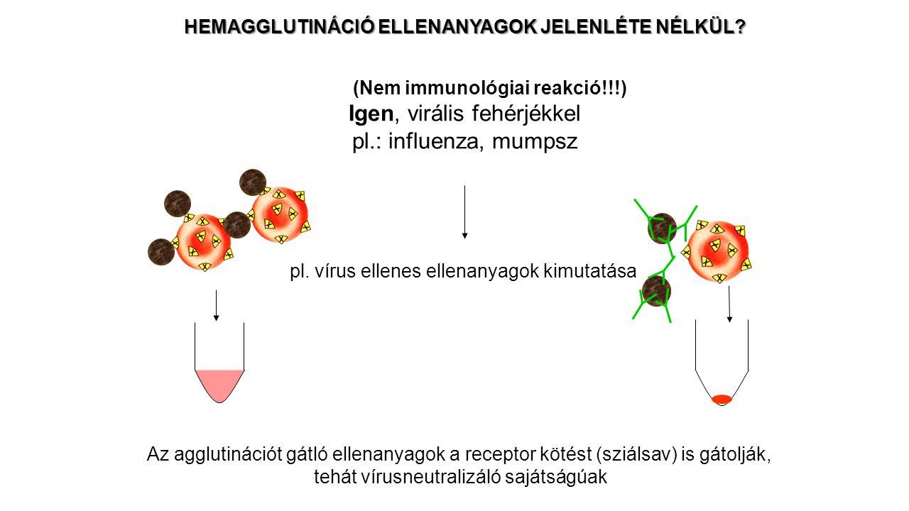 HEMAGGLUTINÁCIÓ ELLENANYAGOK JELENLÉTE NÉLKÜL? Igen, virális fehérjékkel pl.: influenza, mumpsz pl. vírus ellenes ellenanyagok kimutatása Az agglutiná