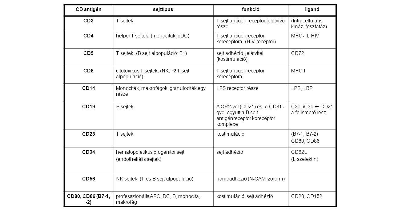 CD antigénsejttípusfunkcióligand CD3T sejtekT sejt antigén receptor jelátvivő része (Intracelluláris kináz, foszfatáz) CD4helper T sejtek, (monociták,