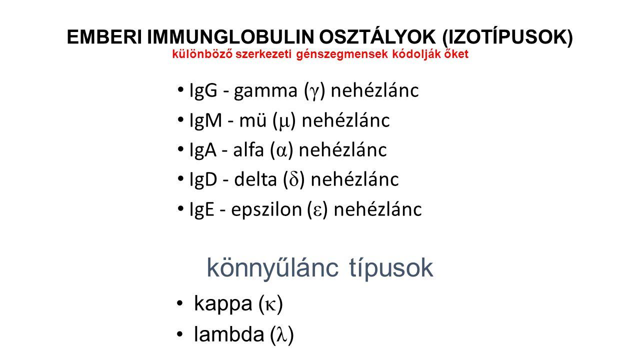 IgG - gamma ( γ ) nehézlánc IgM - mü ( μ ) nehézlánc IgA - alfa ( α ) nehézlánc IgD - delta ( δ ) nehézlánc IgE - epszilon ( ε ) nehézlánc könnyűlánc