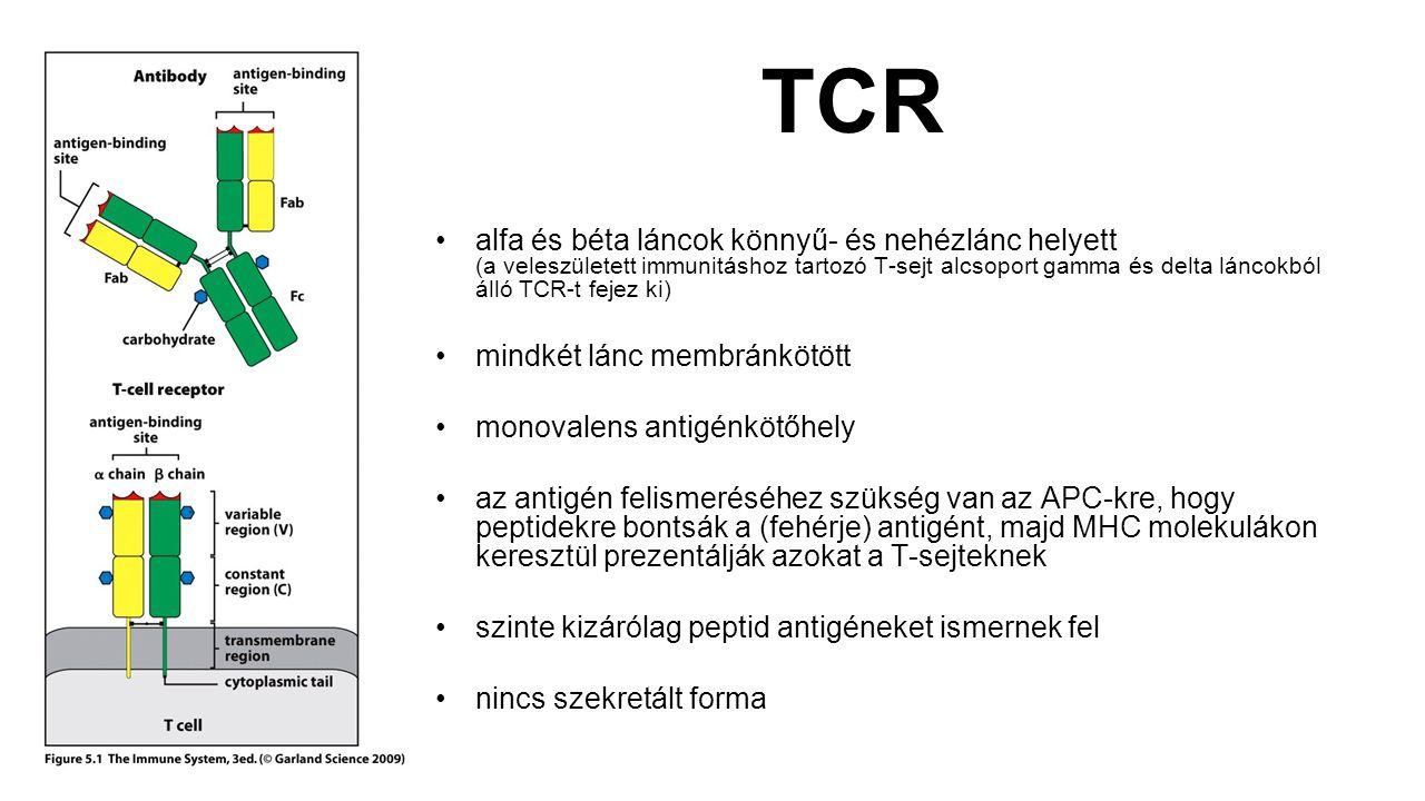 TCR alfa és béta láncok könnyű- és nehézlánc helyett (a veleszületett immunitáshoz tartozó T-sejt alcsoport gamma és delta láncokból álló TCR-t fejez