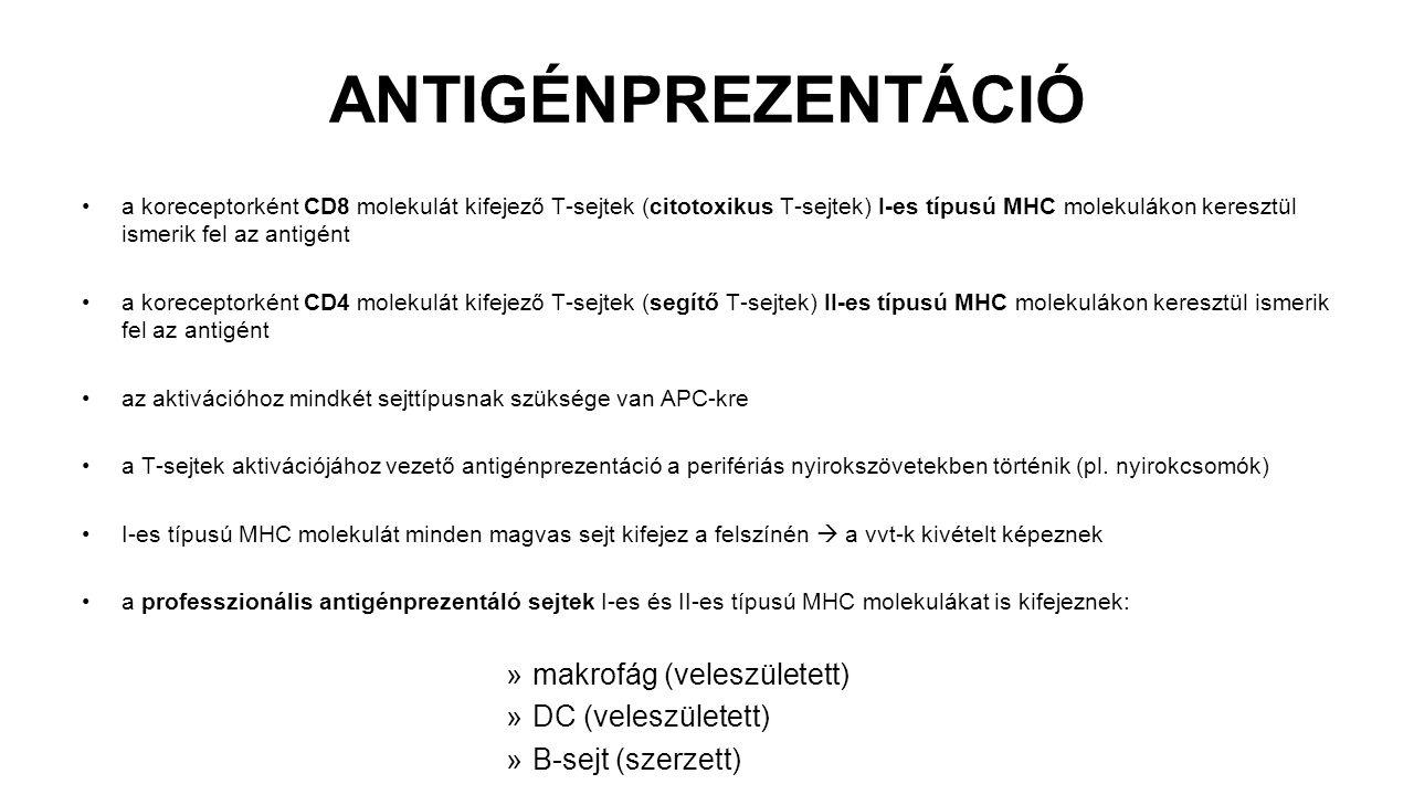 ANTIGÉNPREZENTÁCIÓ a koreceptorként CD8 molekulát kifejező T-sejtek (citotoxikus T-sejtek) I-es típusú MHC molekulákon keresztül ismerik fel az antigé
