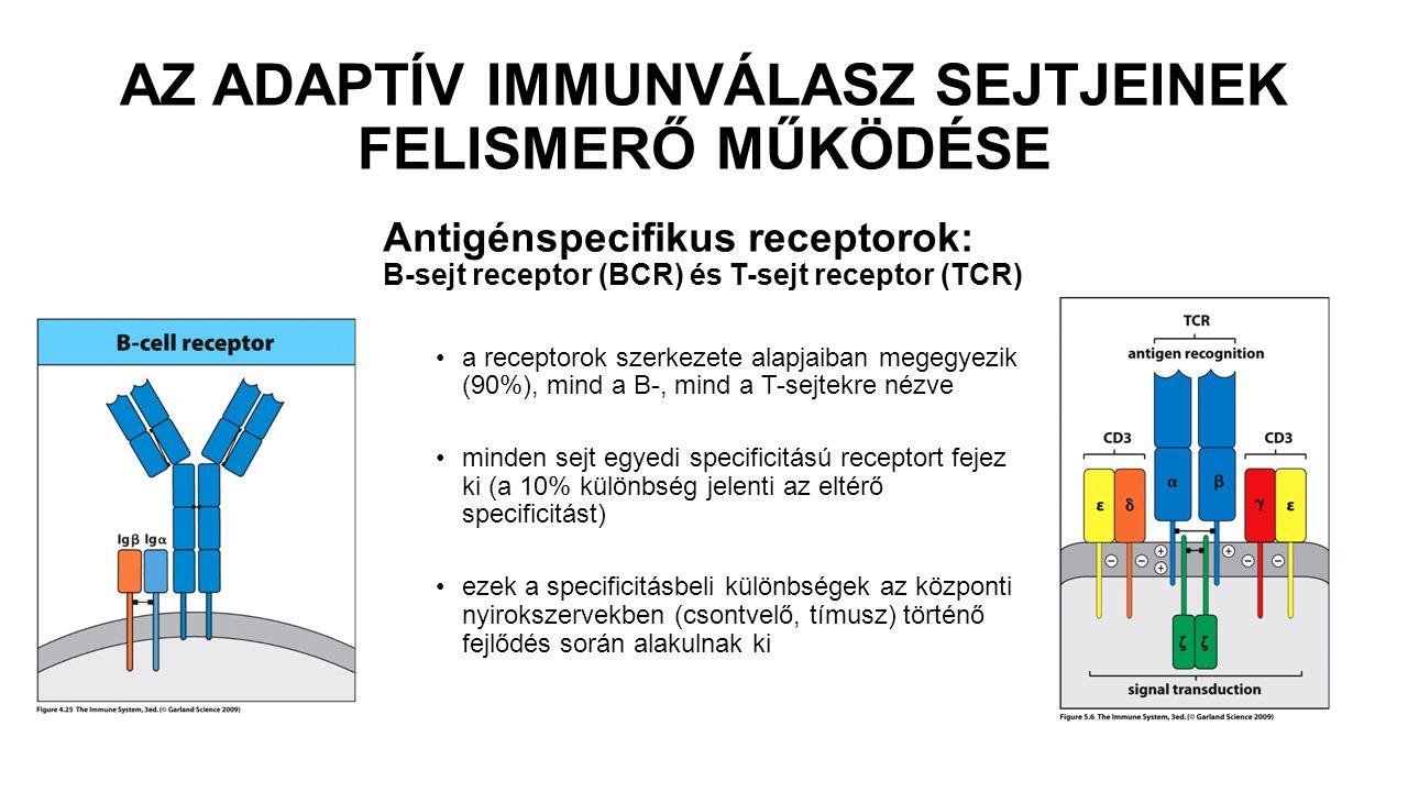 ANTIGÉN Bármilyen anyag, melyet a szerzett immunrendszer képes felismerni (BCR, TCR).