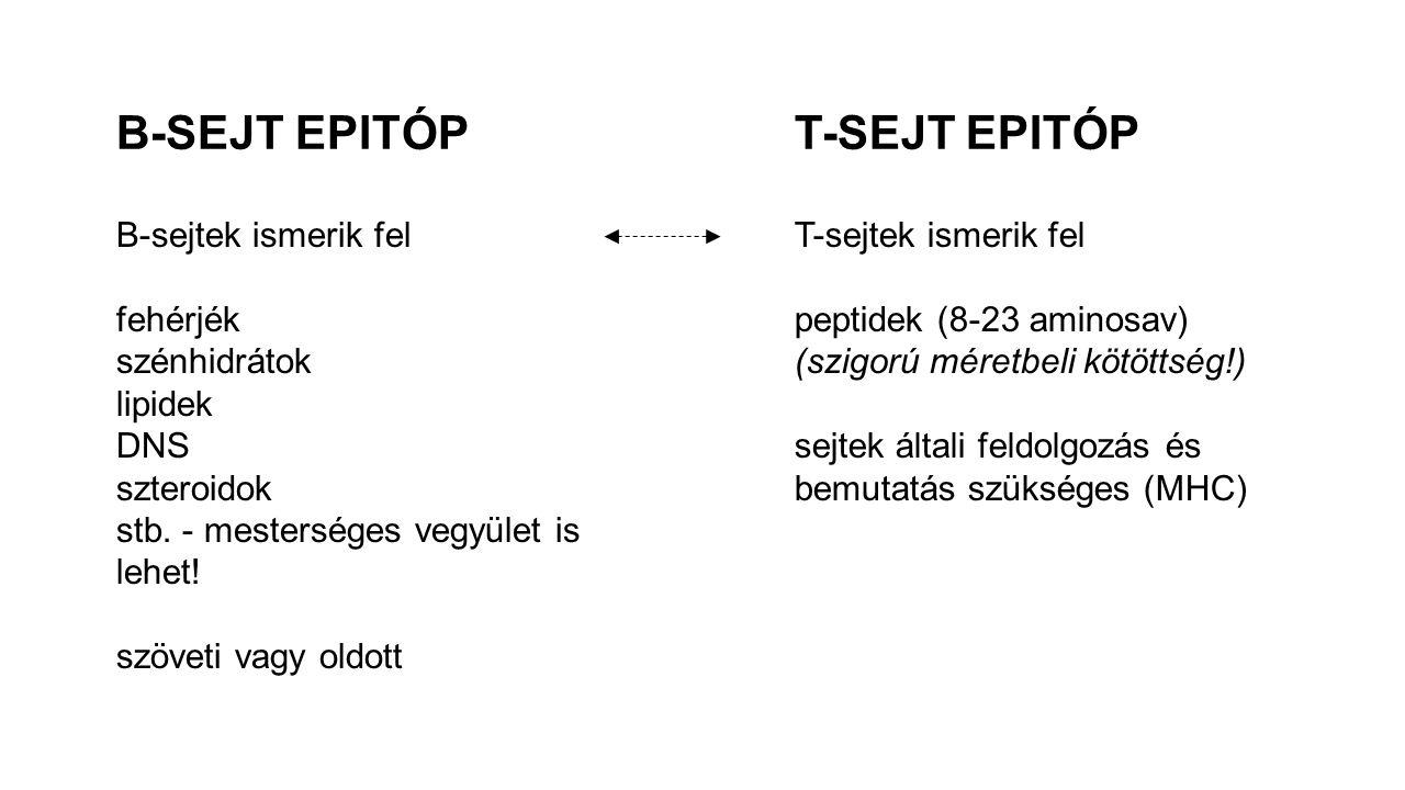 B-SEJT EPITÓPT-SEJT EPITÓP B-sejtek ismerik fel fehérjék szénhidrátok lipidek DNS szteroidok stb. - mesterséges vegyület is lehet! szöveti vagy oldott
