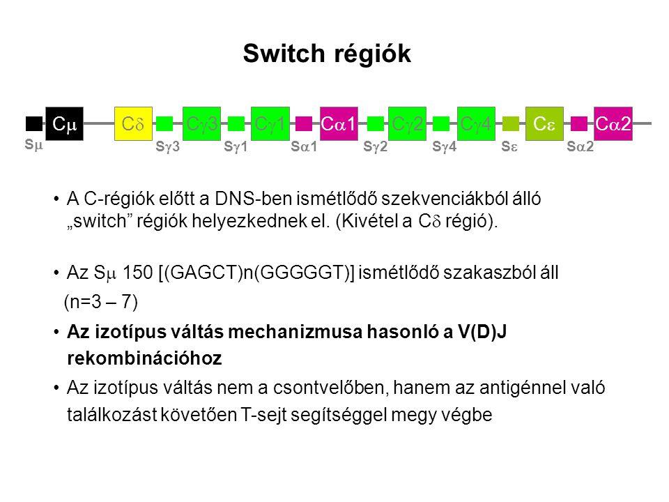 """C2C2CC C4C4C2C2C1C1C1C1C3C3CC CC Switch régiók Az S  150 [(GAGCT)n(GGGGGT)] ismétlődő szakaszból áll (n=3 – 7) Az izotípus váltás mechanizmusa hasonló a V(D)J rekombinációhoz Az izotípus váltás nem a csontvelőben, hanem az antigénnel való találkozást követően T-sejt segítséggel megy végbe S3S3S1S1S1S1S2S2S4S4SS S2S2 SS A C-régiók előtt a DNS-ben ismétlődő szekvenciákból álló """"switch régiók helyezkednek el."""